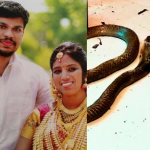 Husband Kills Wife By Throwing A Cobra At Her After She Was Discharged From Hospital Following His Initial Attempt To Kill Her By Releasing A Viper Into Her Bedroom